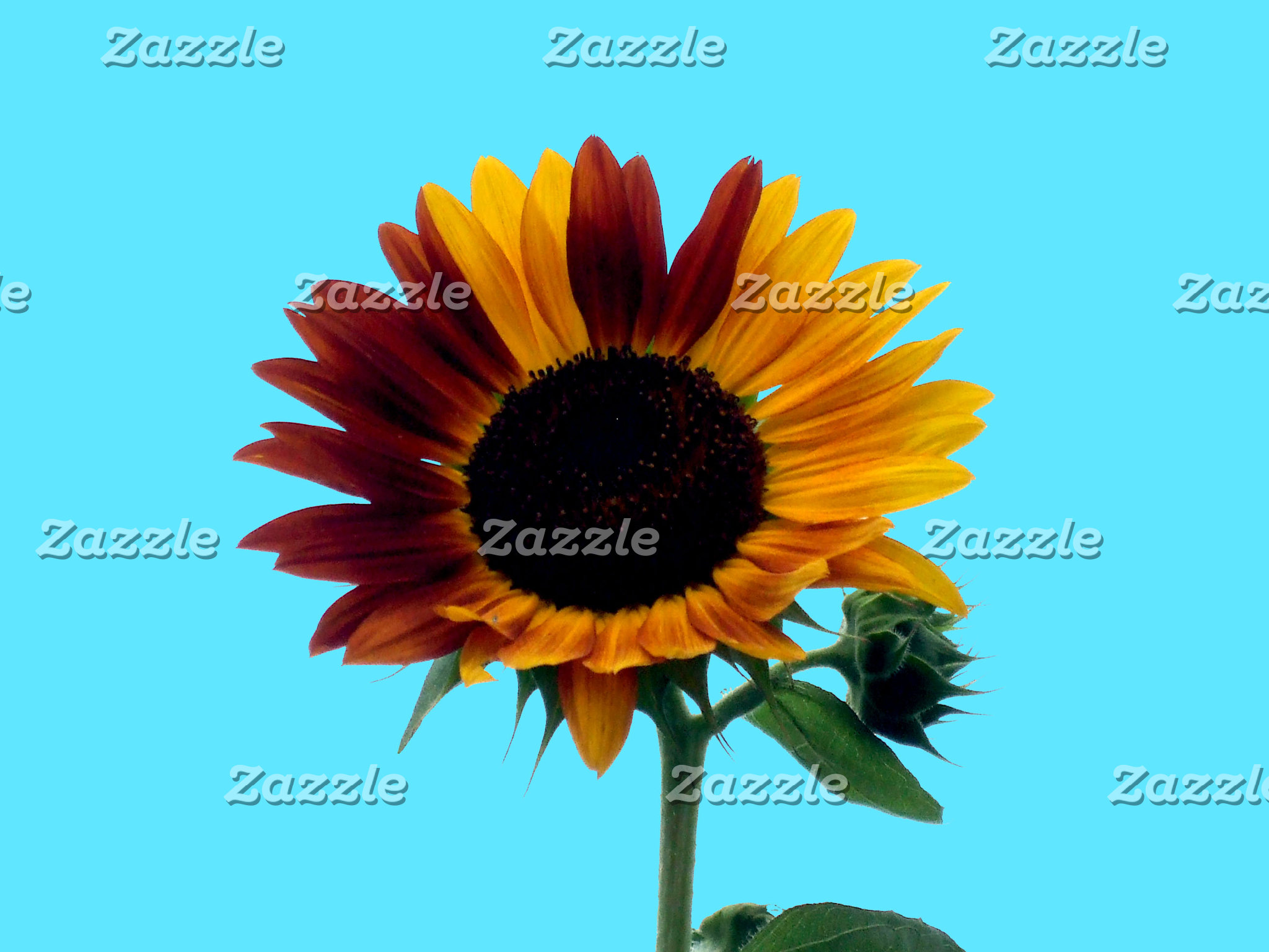 Sunflower Greetings