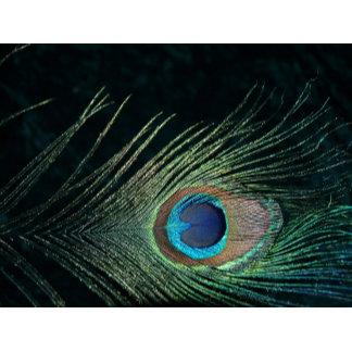 Dark Peacock Feather