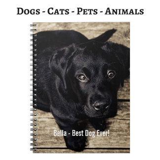 Animals   Dogs   Cats   Pets