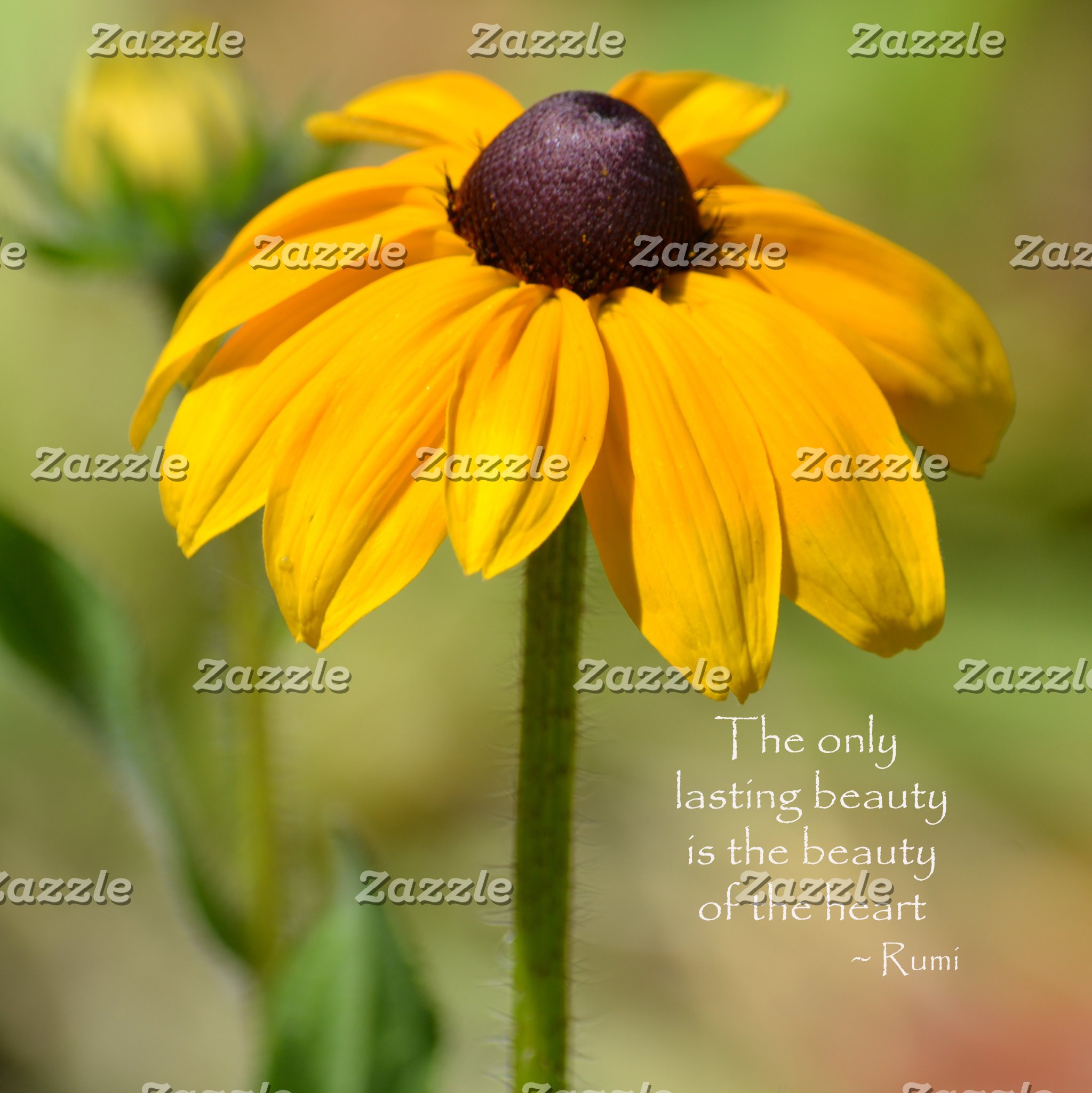 Black Eyed Susan with Quote