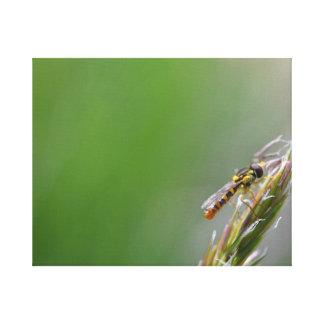 Syrphid Fliegen-Leinwanddruck Leinwanddruck