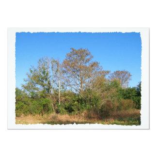 Szene Floridas kahle Zypresse in einem Sumpf Individuelle Ankündigung
