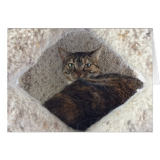 Tabby-Katze, Karte