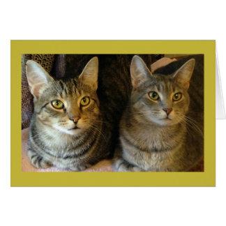 Tabby-Katzen-alles- Gute zum Geburtstagkarte von Mitteilungskarte