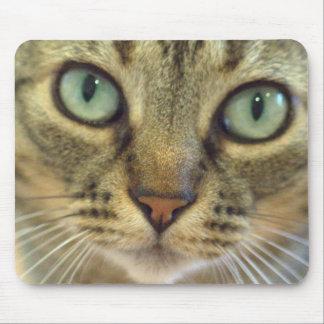 Tabby-Katzen-Gesichts-nahes hohes Mauspad