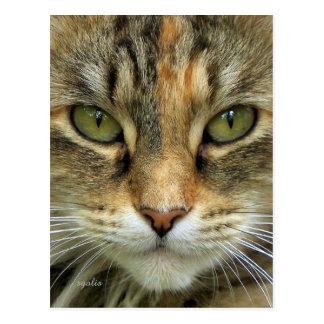 Tabby-Katzen-Porträt-Postkarte Postkarte