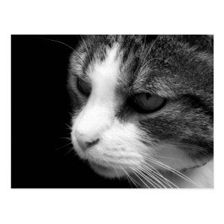 Tabby-Katzen-schwarzes u. weißes Porträt - Postkarte