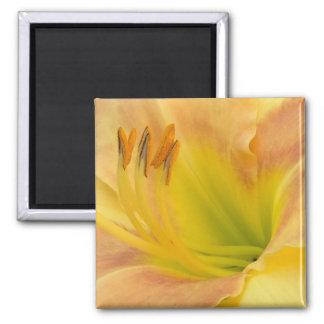 """TAGLILIE """"blondes Baby"""" --- Gelbgrünorange Quadratischer Magnet"""