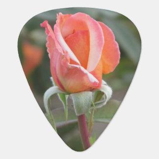 Tahitian Sonnenuntergang-Orangen-Rose Plektron