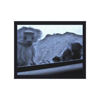 Taif Affen Leinwanddruck