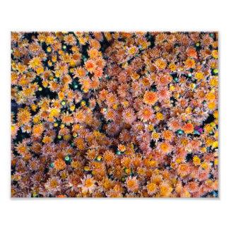 Tant de fleurs minuscules photos