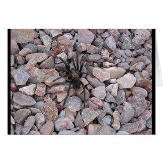 Tarantula auf den Felsen Karte