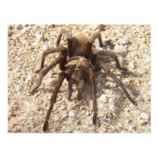 Tarantula gesehen auf Wanderung Postkarte