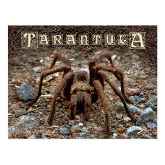 Tarantula Postkarte