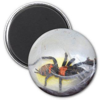 Tarantula Runder Magnet 5,1 Cm