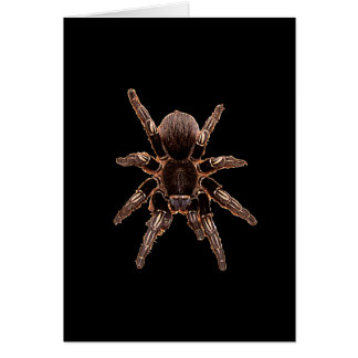 Tarantula-Spinne Karte