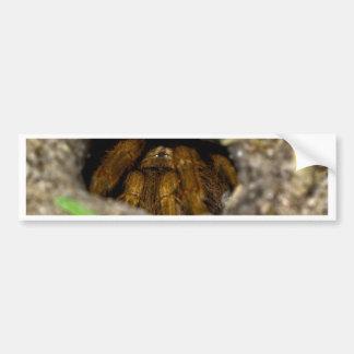 Tarantula-Unterschlupf Autoaufkleber