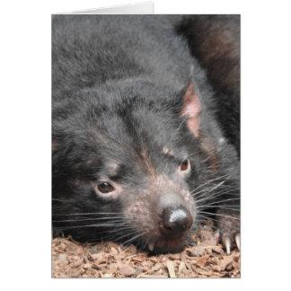 Tasmanischer Teufel Karte