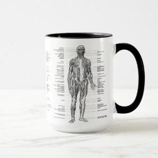 Tasse Cru - muscles humains marqués d'anatomie