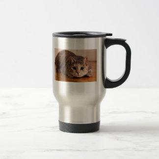 Tasse espiègle de chat