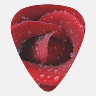 Tau bedeckte die Rote Rose, die herein ernsten Plektrum