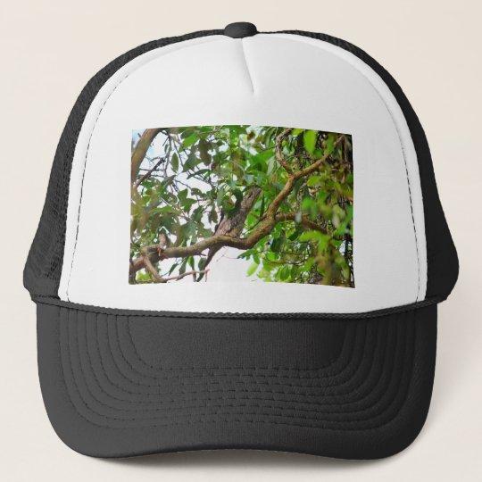TAWNY FROGMOUTH QUEENSLAND AUSTRALIEN NETZ CAPS