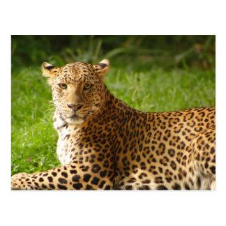 TecBoy.net-Postkarte - Leopard Postkarte