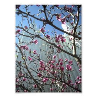 Temple de C.C en fleurs roses Photographie