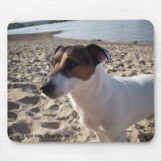 Terrier Capo von Oppenheim Jack Russell, Hund Mauspad
