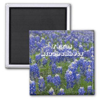 Texas-Staats-Blumebluebonnets-Magnet Quadratischer Magnet