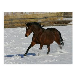 Thoroughbred-Pferd, das in den Schnee läuft Postkarte