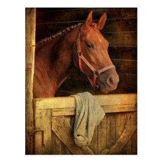 Thoroughbred-Pferd Postkarte