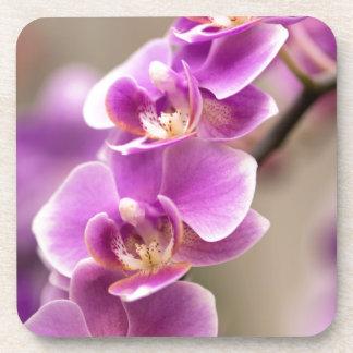 Tiefrosa Phalaenopsis-Orchideen-Blumen-Kette Untersetzer