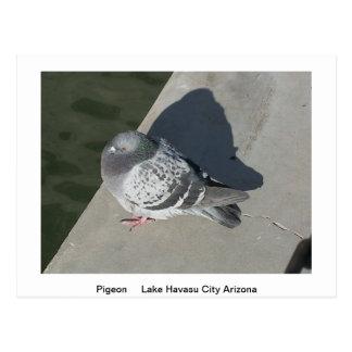 Tier-Postkarte Postkarte