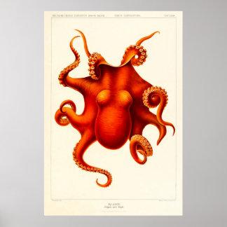 Tierneugier-Krake die Kopffüßer 1915 Poster