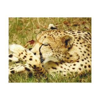 Tiersammlung - entspannender Gepard Leinwanddruck