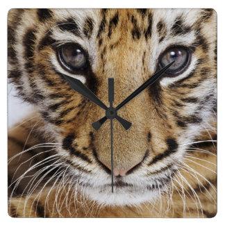 Tiger CUB Quadratische Wanduhr
