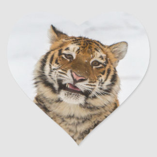 Tiger Herz-Aufkleber
