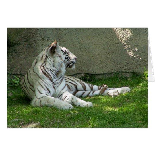 Tiger n Gras Karte