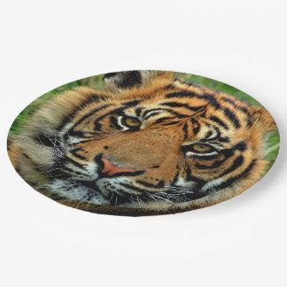 Tiger-PapierTeller Pappteller