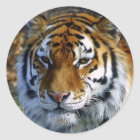 Tiger Runder Aufkleber