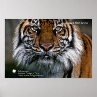 Tiger Soyono Smithsonian | Sumatran Poster