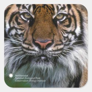 Tiger Soyono Smithsonian | Sumatran Quadratischer Aufkleber