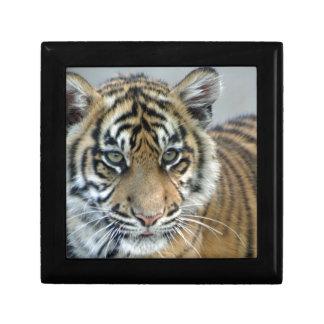 Tigerbaby Geschenkbox