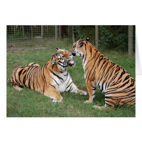 TigerFriends 007 Grußkarte