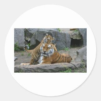 Tigresse et petit animal de tigre espiègle 1 sticker rond