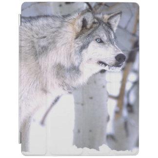 Timberwolf, Canis Lupus, Film Tierutah) iPad Hülle