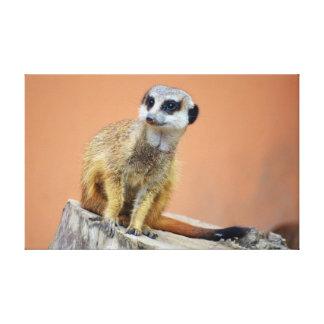 Toile Beau meerkat