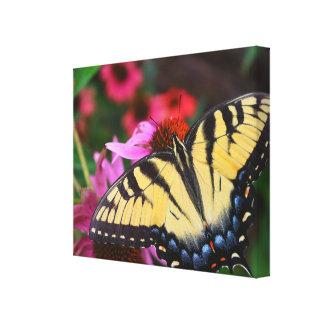 Toile Beau papillon