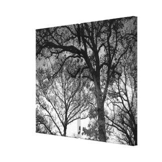 Toile Chênes noirs et blancs en hiver